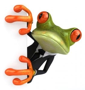 Frog watching a conference PIN automatically being entered